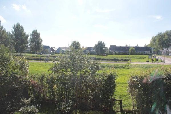 Fluitenkruid, The Hague
