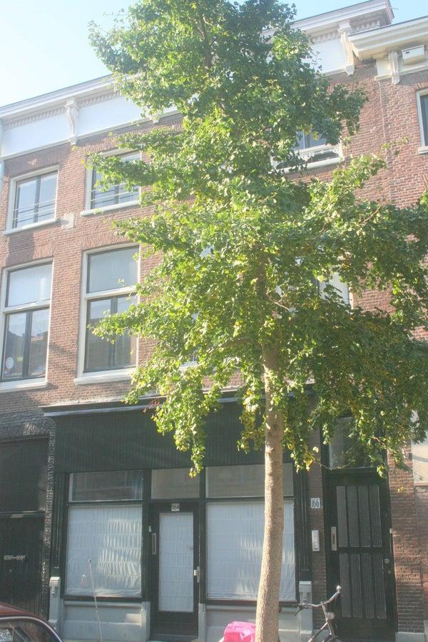 Trompstraat, The Hague