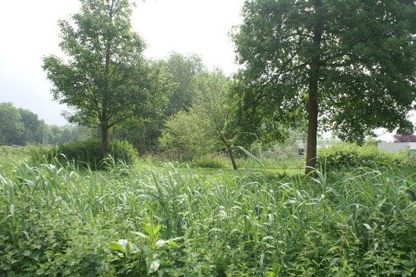 Overhorst, Helmond