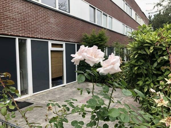 Agaatlaan, Utrecht
