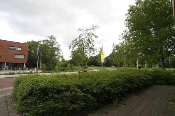 Hoeksewaard