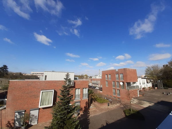 Zomereik, Eindhoven
