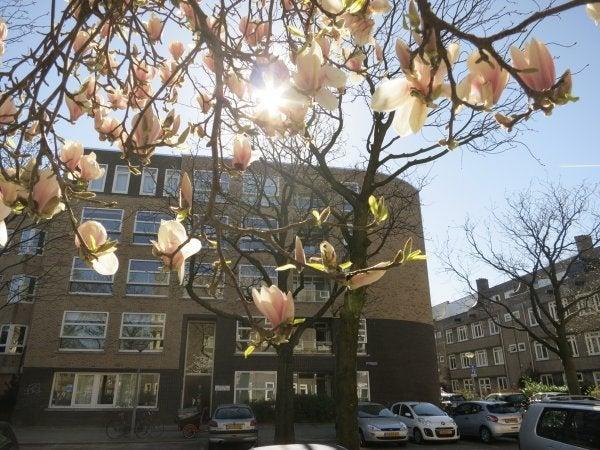 Borssenburgplein, Amsterdam